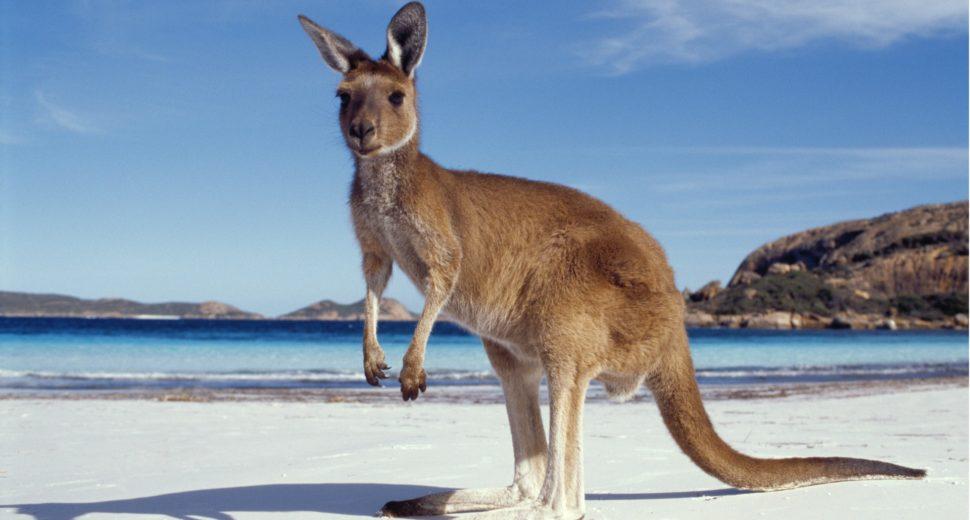 Замужество с греком и отдых на пляжах Австралии.